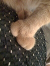 Real_paw